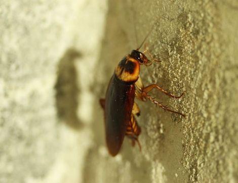 Уничтожение тараканов в Жуковском. Методы и цены