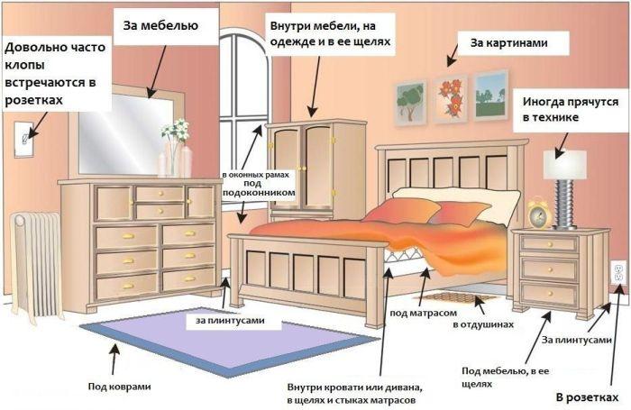 Обработка от клопов квартиры в Москве