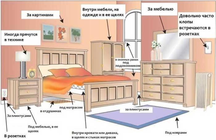 домашние клопы в квартире