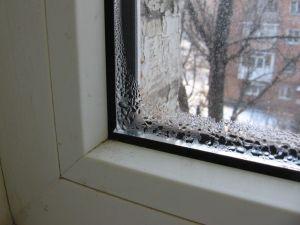 Как вывести плесень на стенах в квартире