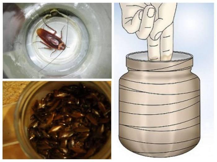 Народные средства от тараканов в квартире самое эффективное