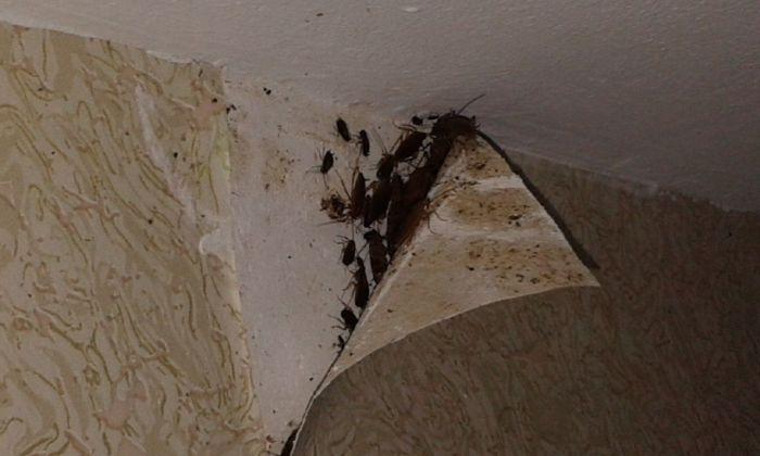Обработка от тараканов квартиры в Москве, цена