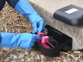 Как избавиться от мышей на участке дачном и садовом?