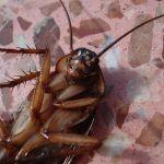 Поморить тараканов Подольск
