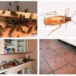 СЭС от тараканов в Балашихе