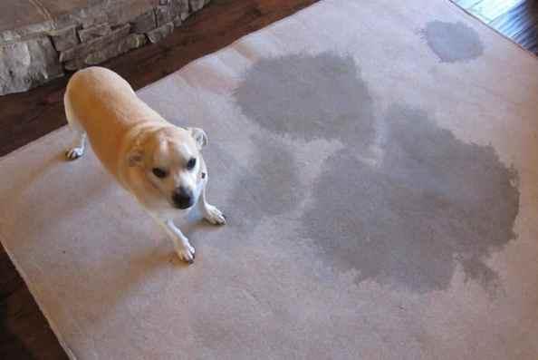 Как избавиться от запаха собачьей мочи в квартире на диване