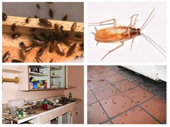 Уничтожение тараканов в Балашихе. Цены. Гарантия