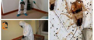 Травление тараканов в Люберцах