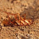 Уничтожение тараканов в г. Подольск