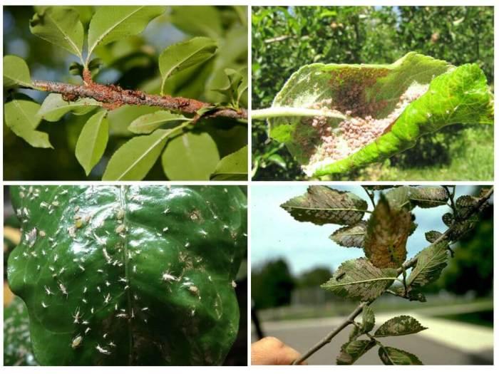 Как избавиться от тли на растениях, деревьях и кустах