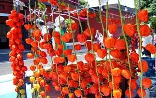 千日詣り-ほおずき縁日1