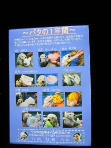 大阪旅遊實記 海遊館-15