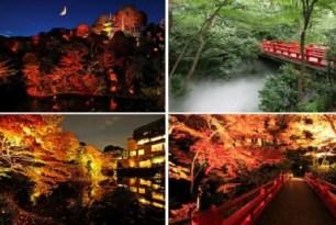 紅葉季節的到來!東京的賞楓名點!