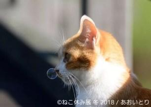 「貓咪休日展 冬 2018」1月26日起於東京・淺草橋開展 – 350項以上的作品展示與原創商品☆
