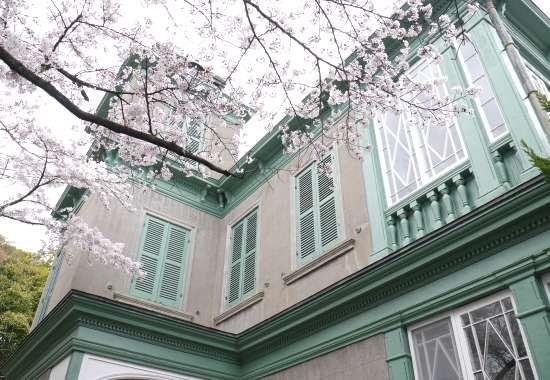 ハンター邸と桜