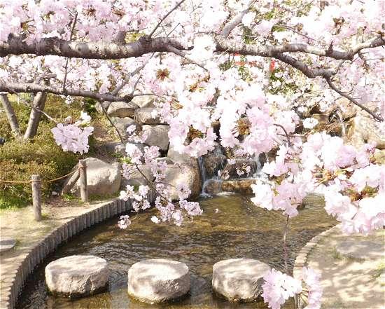 桜守公園 川