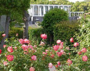 須磨離宮公園 バラ園