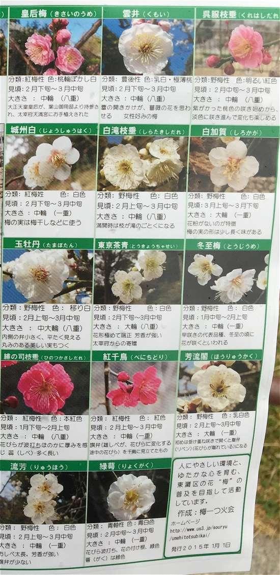 梅の種類 白梅