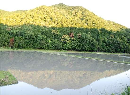 中畑町 田園風景