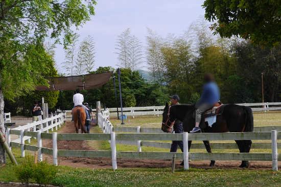 イングランドの丘 乗馬