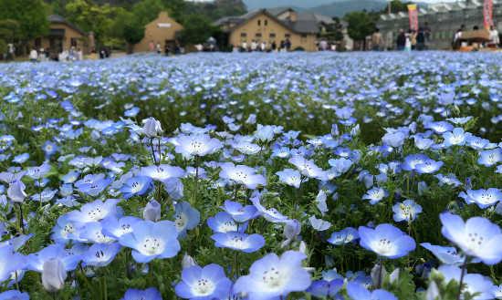 イングランドの丘 花畑