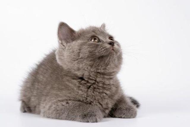 Хочу котенка а любимый не разрешает завести..