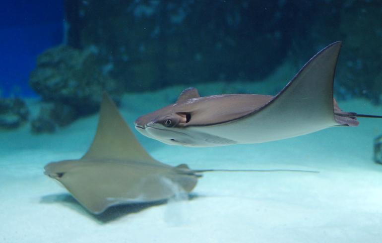 """""""Robotation"""" - une exposition sur les robots sur VDNH"""