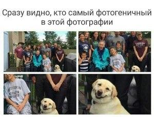 Конечно собака
