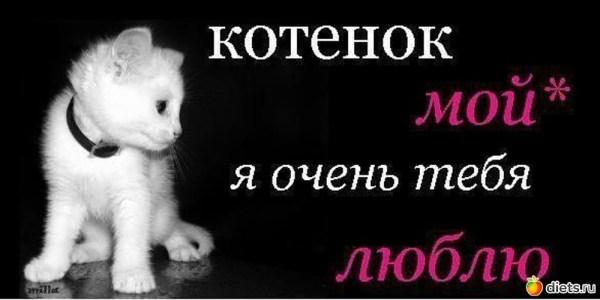 Котик Мой Я Тебя Люблю Картинки