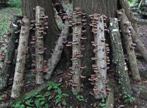 Funghi sui tronchi