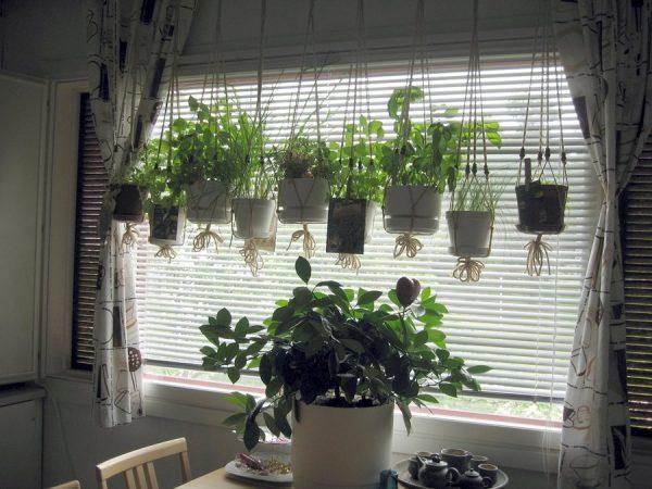 Как правильно встроить комнатные цветы и растения в ...