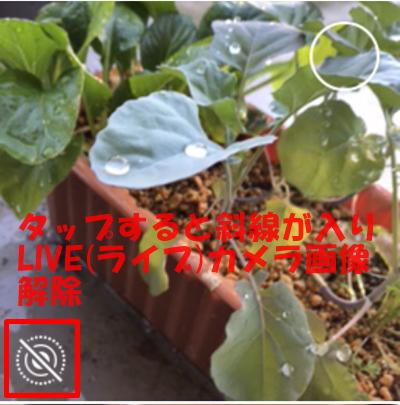 LIVE(ライブ)カメラ画像を解除
