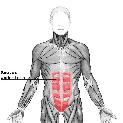 腹筋の図解