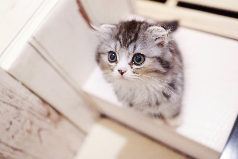 猫白血病ウイルス感染症,症状,潜伏期間,感染経路