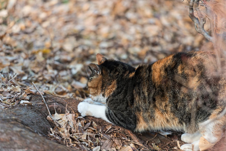 猫汎白血球減少症,症状,血便,完治