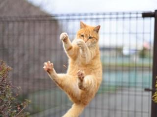 猫,骨折,原因,治療法