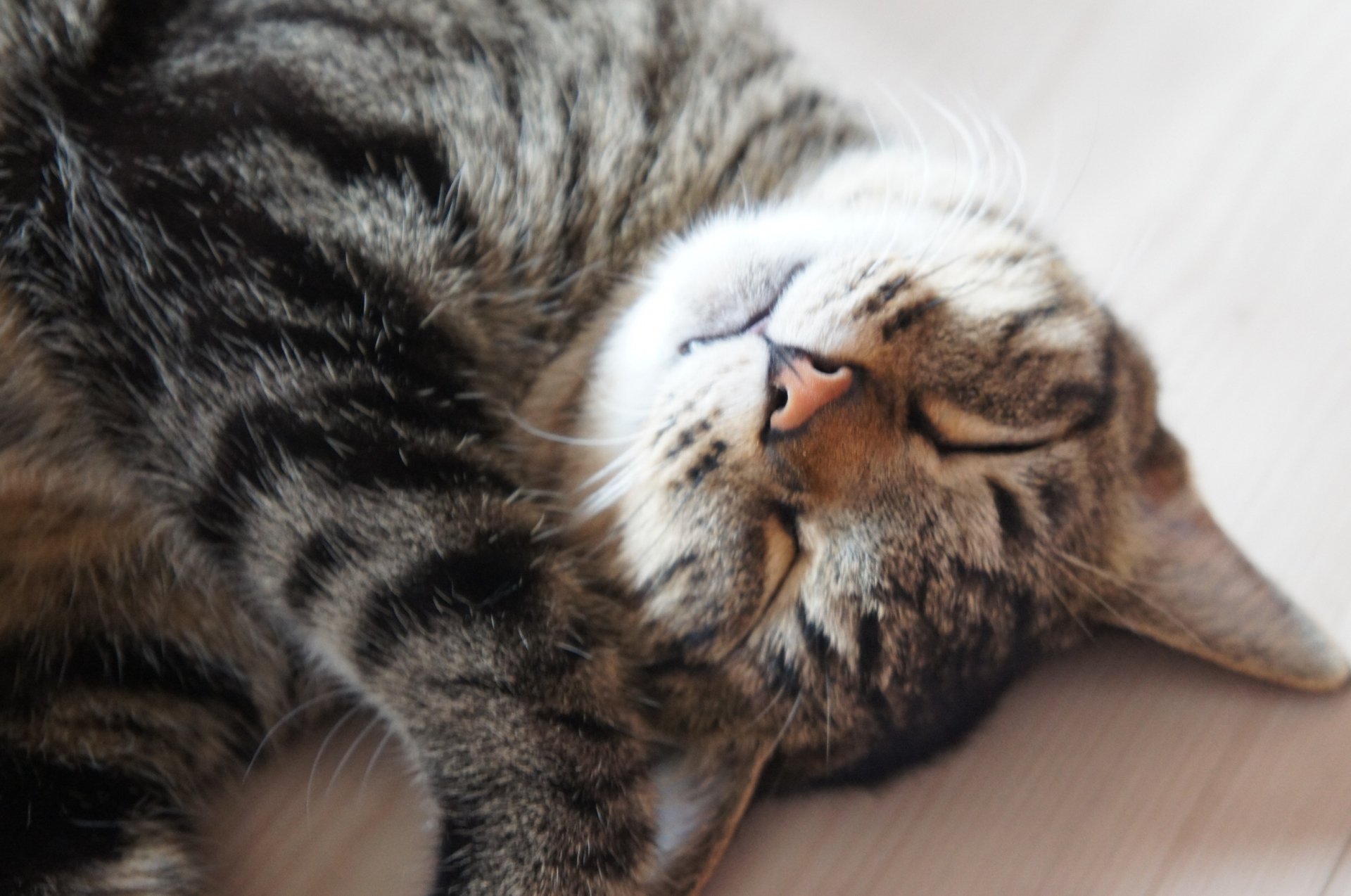 猫,乳び胸,寿命,治療,症状