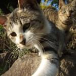 猫横隔膜ヘルニア,手術,成功率,寿命