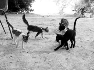 猫,怪我,餌食べない