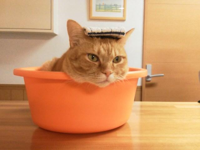 猫,ノミ,駆除,お風呂