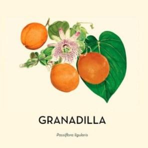 Granadilla Passiflora ligularis 2