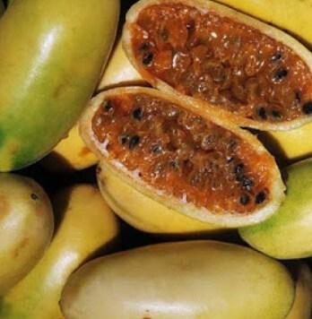 fruta tumbo curuba 2 (1) (1)