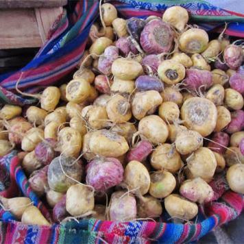img maca andina ginseng peruano peruvian