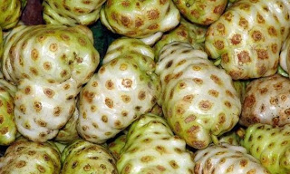 noni devil fruit 3