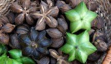 sacha inchi seeds and oil