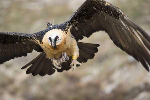 Хищные птицы ивановской области фото с названиями – какие ...
