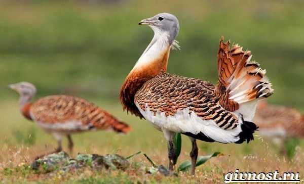 Занесены в красную книгу птицы – Птицы Красной Книги ...