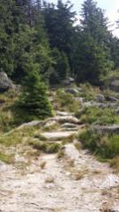 Weg zum Großen Osser
