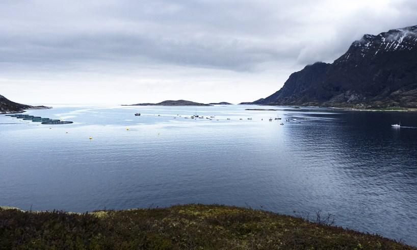 mistfjorden