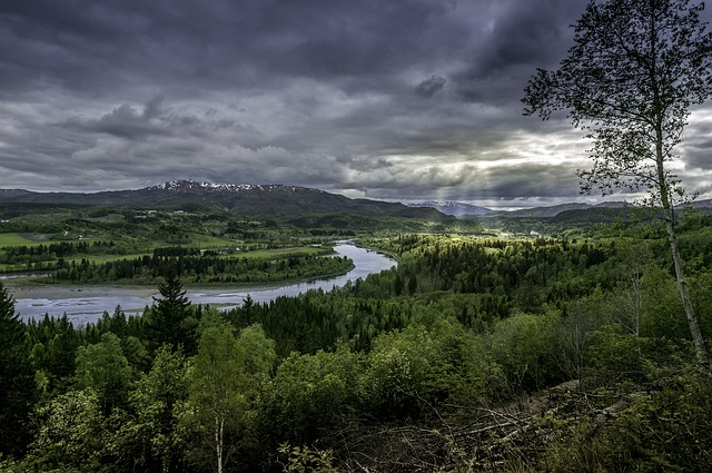 natur skog elv